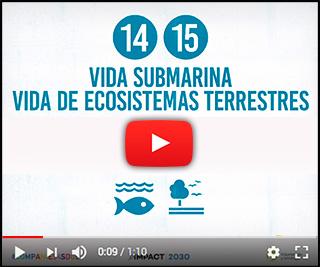 Video retos 14 y 15